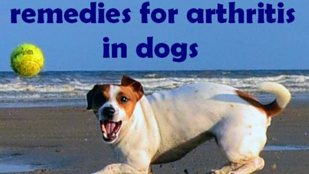 arthritis-in-dogs-treatment-natural-home-remedies-symptoms