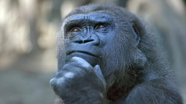 thinking-thoughts-without-language