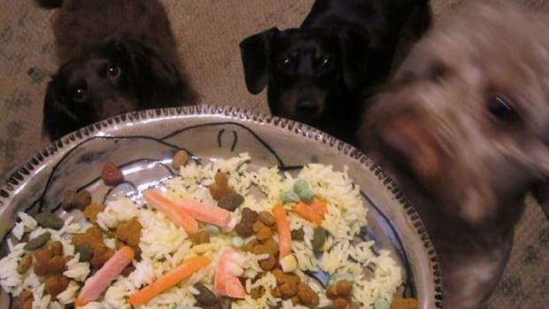 vegetables-that-are-good-for-dogs