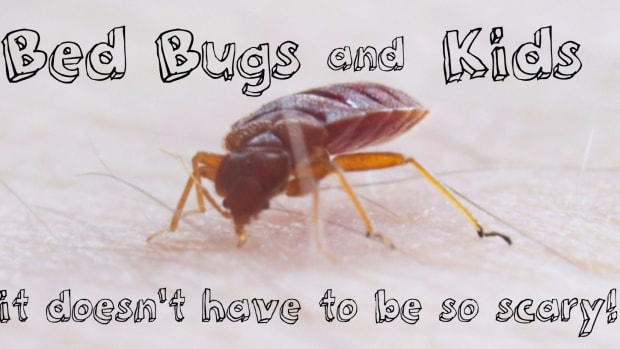 bed-bugs-and-children