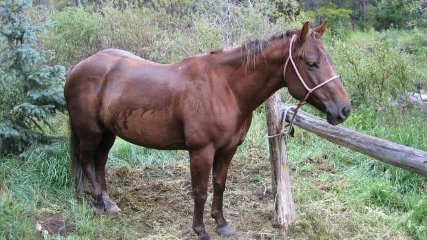 horsetrainingtoolsspurs