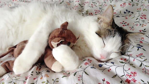 how-to-understand-feline-distemper