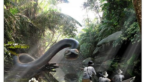 titanoboa-the-worlds-largest-snake-ever