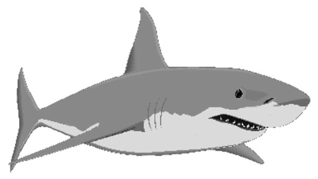 shark-attacks-in-british-waters