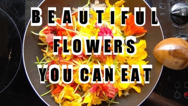 25-flowers-you-can-eat