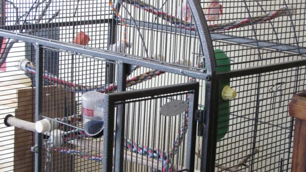 how-to-set-up-a-bird-cage-for-a-cockatiel-parrakeet-or-parrot