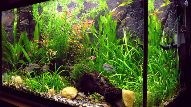 how-to-cycle-your-new-fish-tank