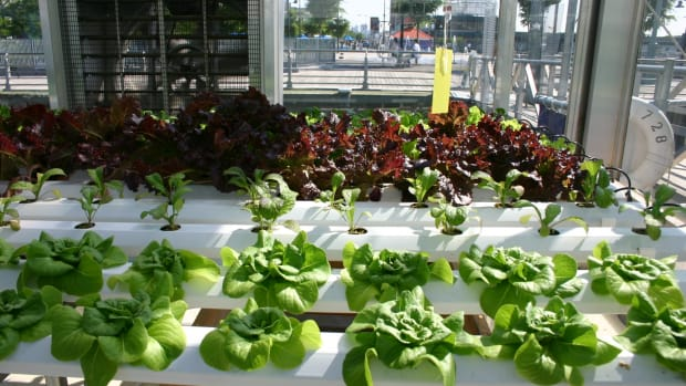 the-indoor-hydroponic-garden-for-urban-living