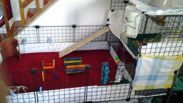 how-to-build-a-guinea-pigs-cage