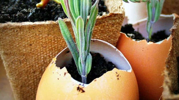 how-to-grow-herbs-easily
