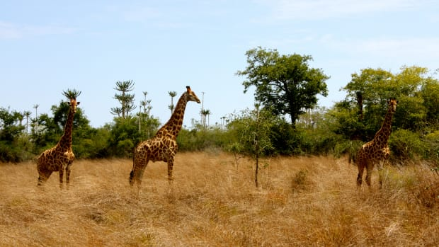african-wildlife-national-parks