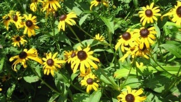 annuals-biennials-and-perennials-plants-and-herbs