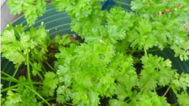 parsleysagerosemaryandthyme