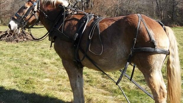 using-horses-for-draft-power