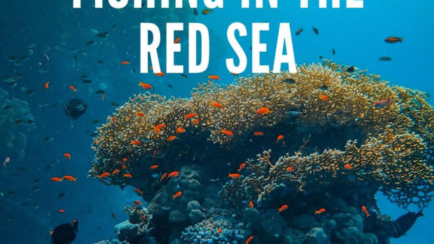 fishing-in-the-red-sea