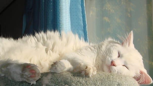 cats-pet-web-pages