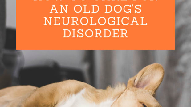 the-challenges-of-looking-after-a-senior-dog-with-a-neurological-disorder
