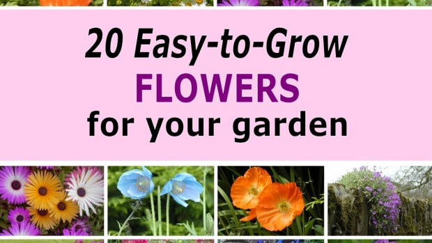 best-garden-flowers-for-brightening-up-your-garden
