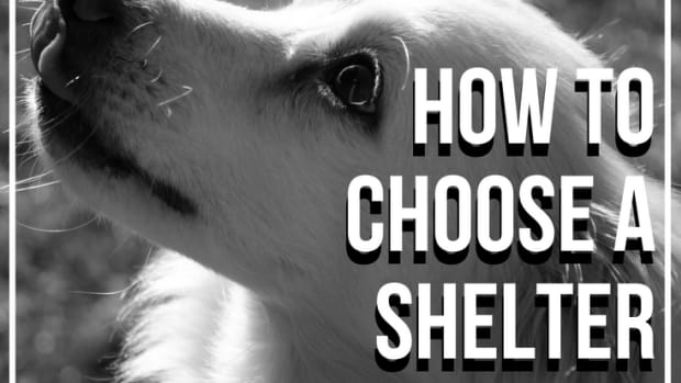 how-to-choose-a-shelter-dog