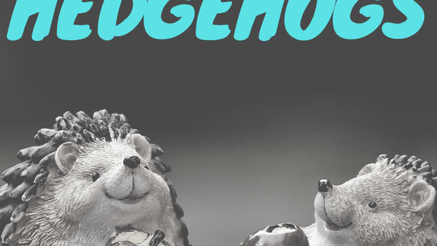 pet-hedgehogs