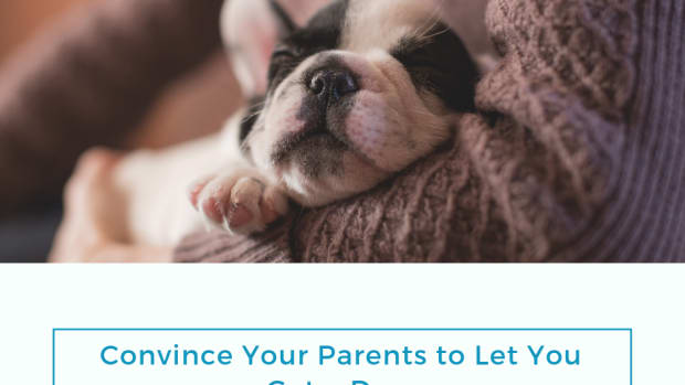 how-to-convince-your-parents-to-let-you-get-a-dog
