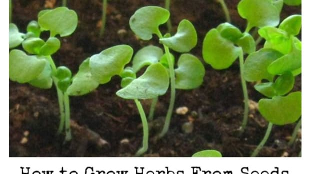 how-to-start-an-herb-garden-from-seed