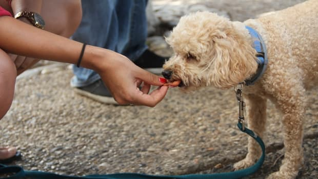 6-foods-you-must-avoid-feeding-to-dogs