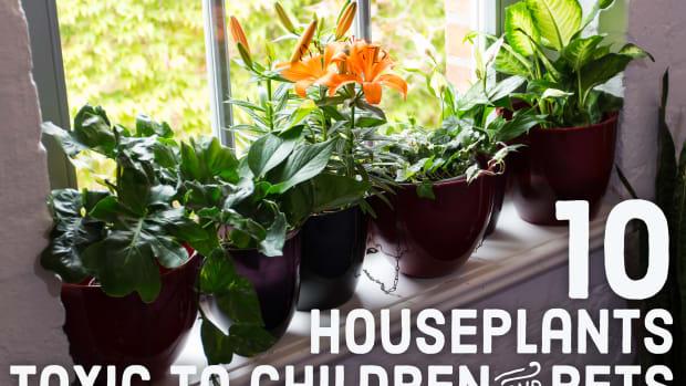 dangerous-beauties-twenty-toxic-houseplants-to-avoid-around-children-and-pets