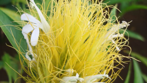 exotic-flower-photos-from-costa-rica