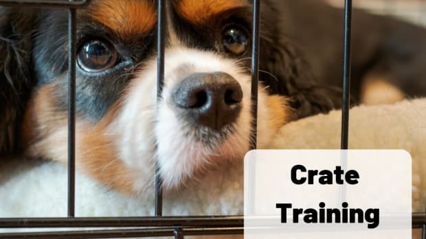 crate-training-tips-for-creating-your-puppy-or-dogs-personal-den