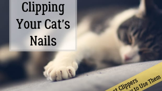the-best-cat-nails-clipper