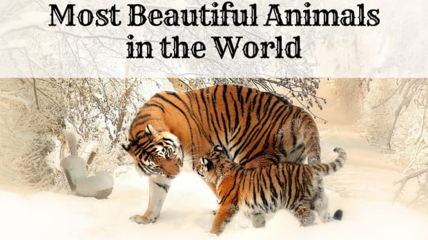 top-10-most-beautiful-animals-in-the-world
