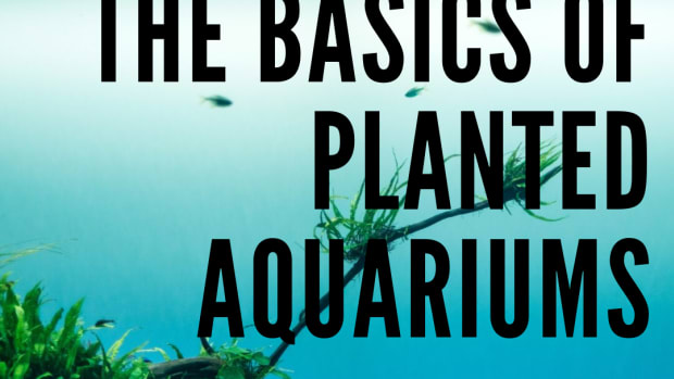 the-basics-of-a-planted-aquarium