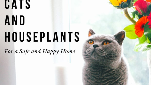 how-to-choose-cat-friendly-plants