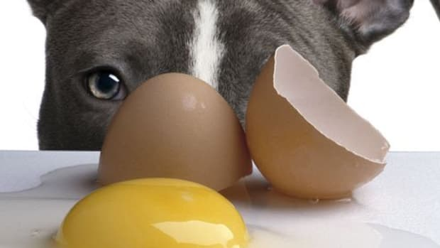 dogs-and-raw-eggs-nutrition-or-poison