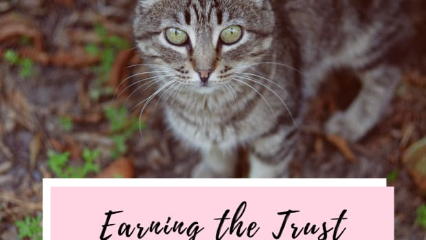 how-to-gain-a-stray-cats-trust