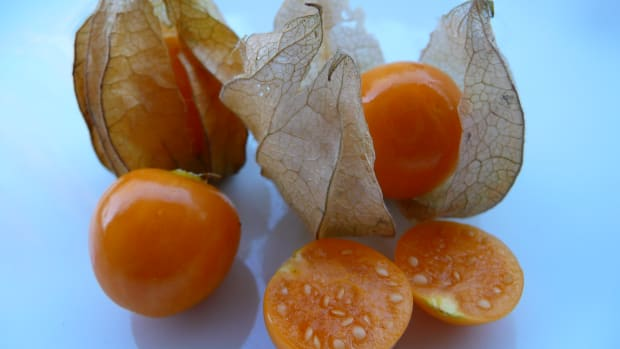 rasbhari-cape-gooseberries-or-golden-berries-nutrition-health-benefits-recipes-and-more