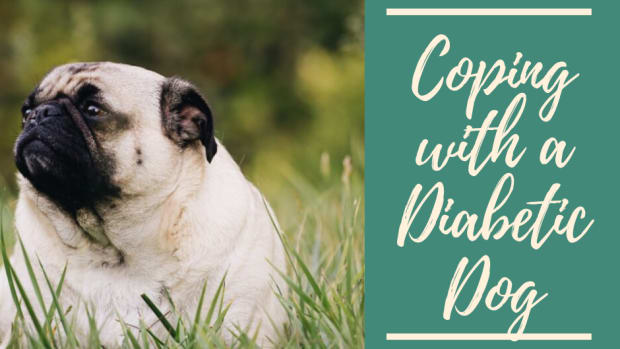how-to-cope-with-a-diabetic-dog
