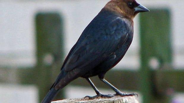 unusual-strange-and-weird-birds-of-north-carolina