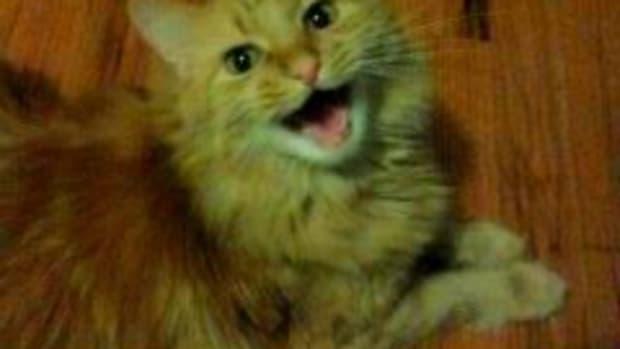 cats-get-car-sick-too