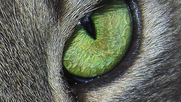 22-killer-cat-names-for-female-cats