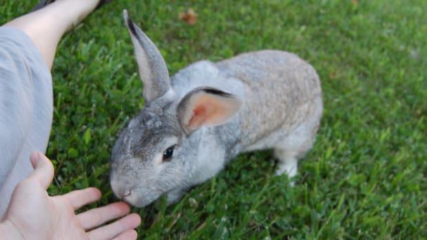 free-range-bunnies-a-story-of-rabbit-emancipation