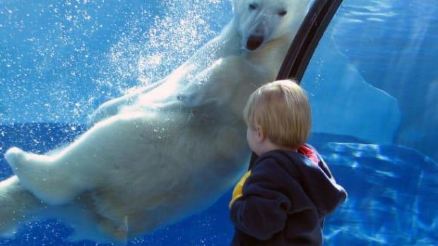 teach-children-about-zoos