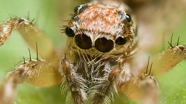 facts-about-spiders