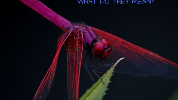dragonfly-facts-symbols-meaning-photos