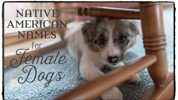 cool-native-american-names-for-female-dogs