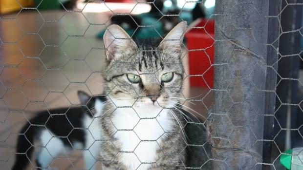 adopting-a-new-pet-after-your-cat-or-dog-passes-away