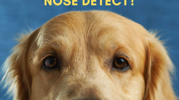 a-dogs-nose-the-different-smells-a-canine-can-detect