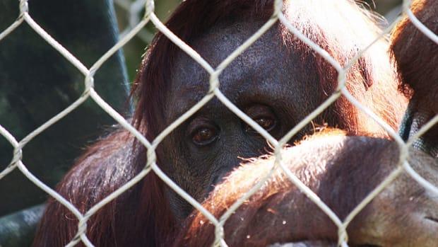 sad-zoo-animals