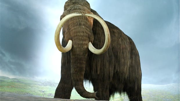 bringing-back-extinct-animals-research-benefits-and-disadvantages